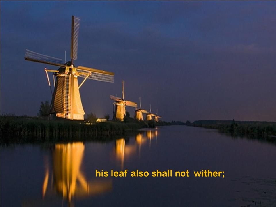 his leaf also shall not wither;