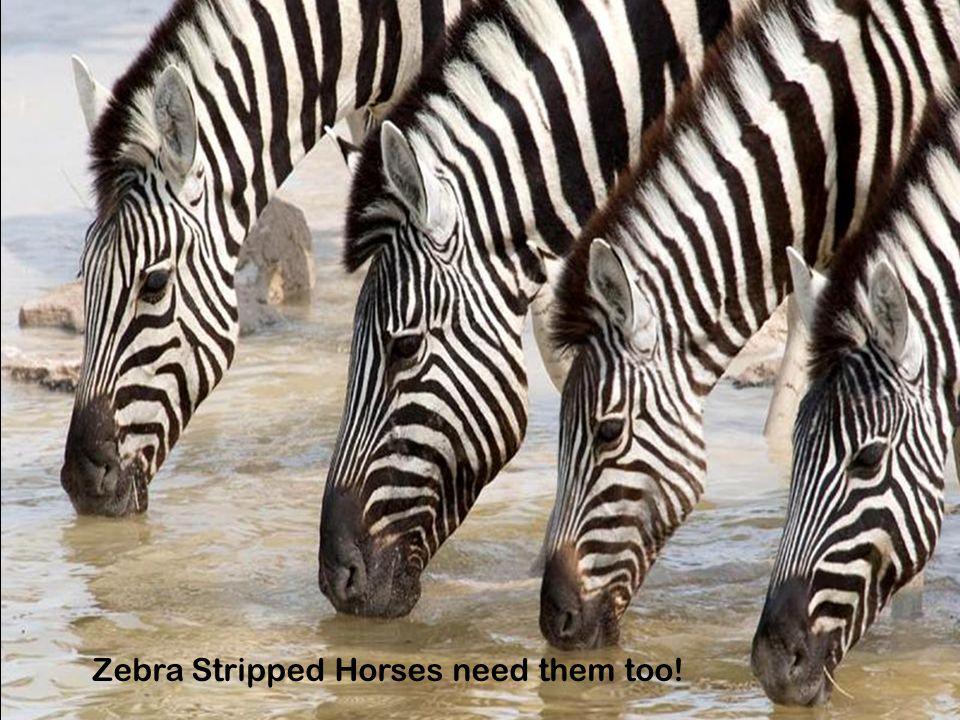 Zebra Stripped Horses need them too!