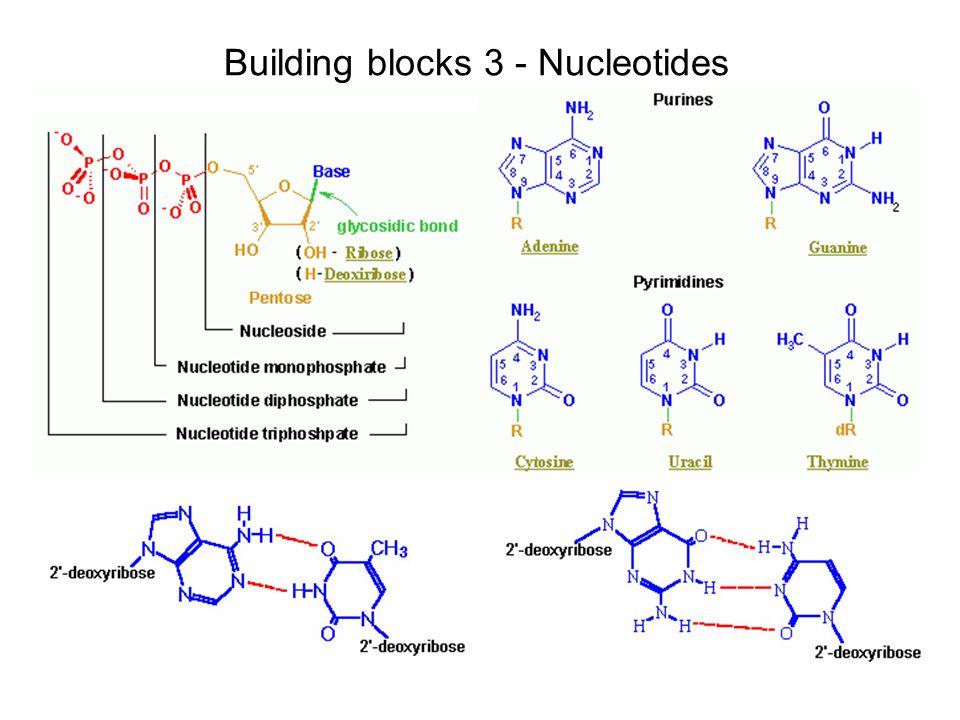 Building blocks 3 - Nucleotides