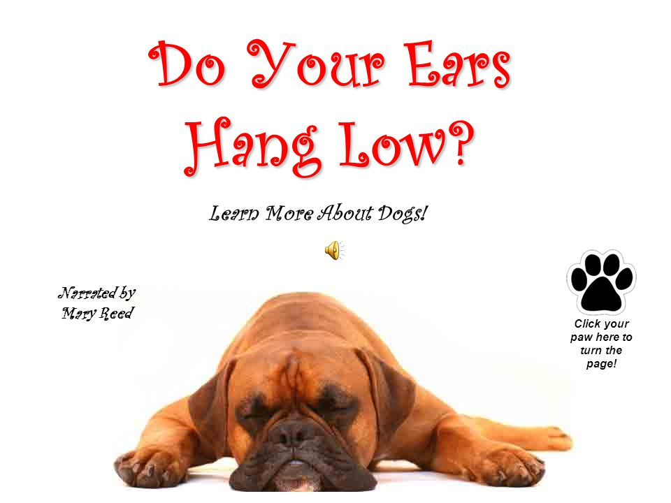 Do Their Ears Hang Low.Click on the dogs to learn more about them.