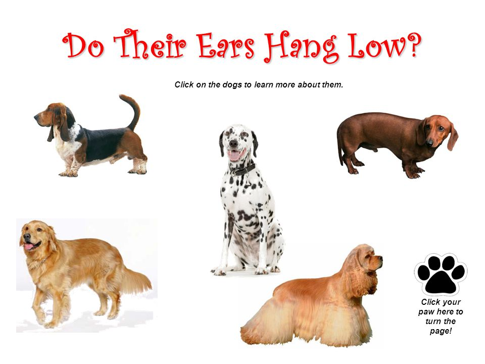 Do Their Ears Hang Low. Click on the dogs to learn more about them.