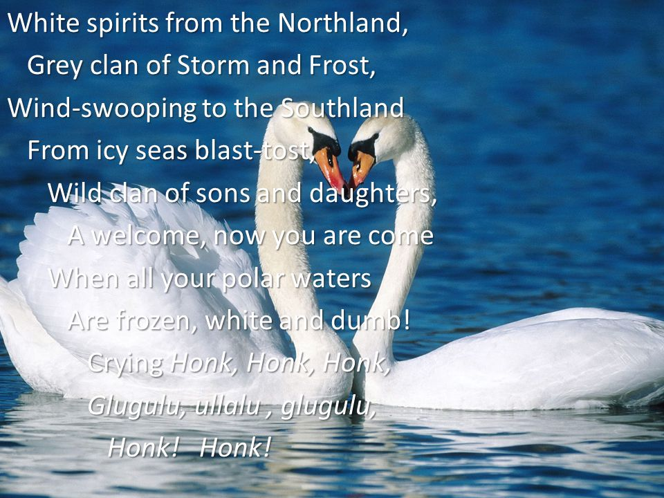 White spirits from the Northland, Grey clan of Storm and Frost, Grey clan of Storm and Frost, Wind-swooping to the Southland From icy seas blast-tost, From icy seas blast-tost, Wild clan of sons and daughters, Wild clan of sons and daughters, A welcome, now you are come A welcome, now you are come When all your polar waters When all your polar waters Are frozen, white and dumb.