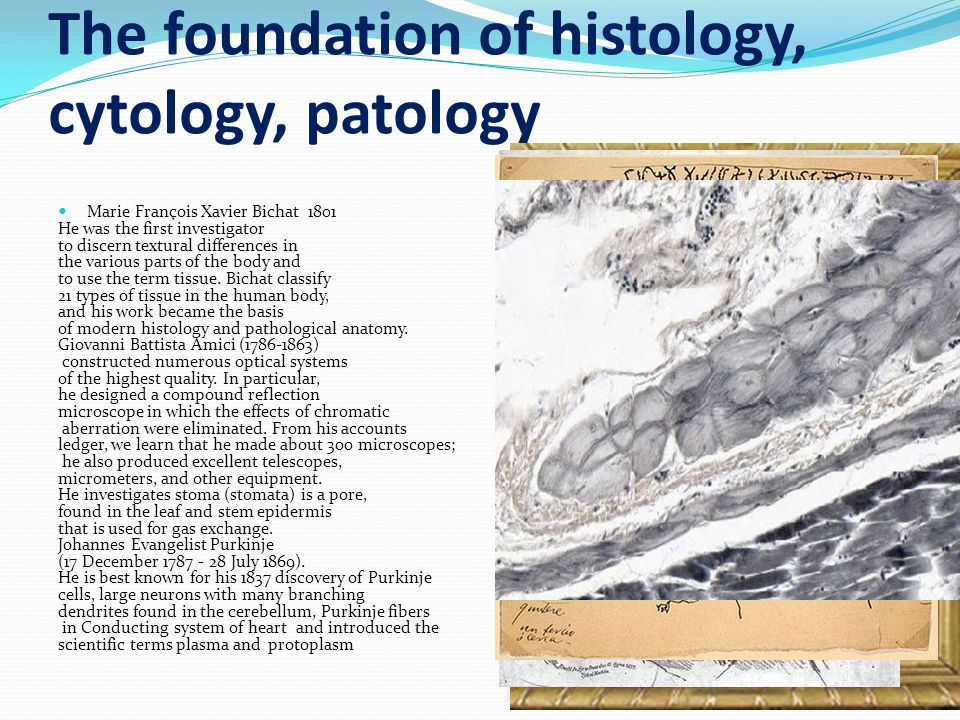 The foundation of histology, cytology, patology Marie François Xavier Bichat 1801 He was the first investigator to discern textural differences in the various parts of the body and to use the term tissue.