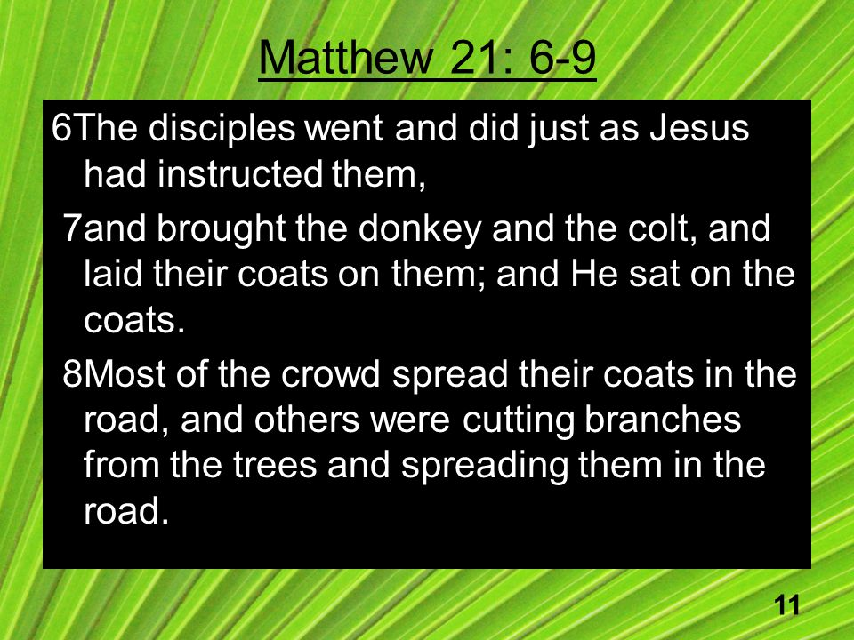 11 Matthew 21: 6-9 6The disciples went and did just as Jesus had instructed them, 7and brought the donkey and the colt, and laid their coats on them; and He sat on the coats.