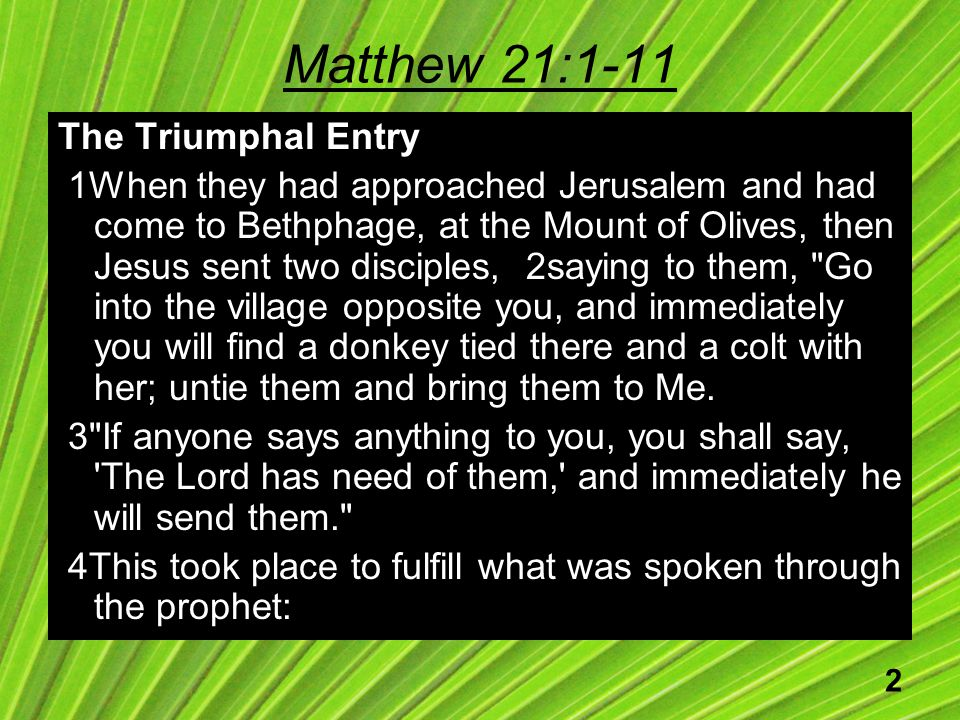 2 Matthew 21:1-11 The Triumphal Entry 1When they had approached Jerusalem and had come to Bethphage, at the Mount of Olives, then Jesus sent two disciples, 2saying to them, Go into the village opposite you, and immediately you will find a donkey tied there and a colt with her; untie them and bring them to Me.