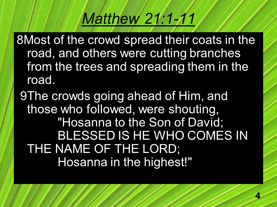 4 Matthew 21:1-11 8Most of the crowd spread their coats in the road, and others were cutting branches from the trees and spreading them in the road.