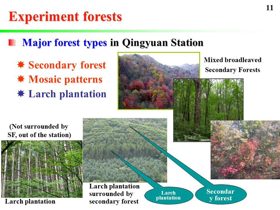 Experiment forests  Secondary forest  Mosaic patterns  Larch plantation Mixed broadleaved Secondary Forests Larch plantation Major forest types in