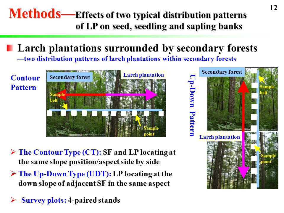 Larch plantations surrounded by secondary forests —two distribution patterns of larch plantations within secondary forests  The Contour Type (CT): SF and LP locating at the same slope position/aspect side by side  The Up-Down Type (UDT): LP locating at the down slope of adjacent SF in the same aspect Contour Pattern Secondary forest Larch plantation Sample belt Sample point Up-Down Pattern Sample belt Sample point Secondary forest Larch plantation  Survey plots: 4-paired stands 12 Methods— Effects of two typical distribution patterns of LP on seed, seedling and sapling banks