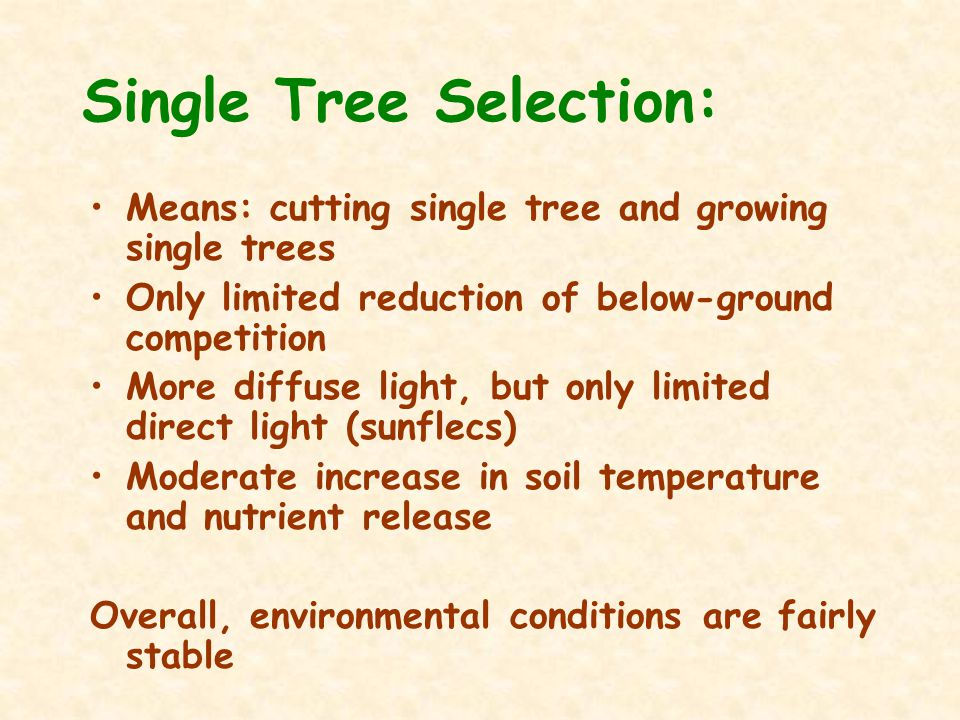 Single Tree Selection: Means: cutting single tree and growing single trees Only limited reduction of below-ground competition More diffuse light, but only limited direct light (sunflecs) Moderate increase in soil temperature and nutrient release Overall, environmental conditions are fairly stable