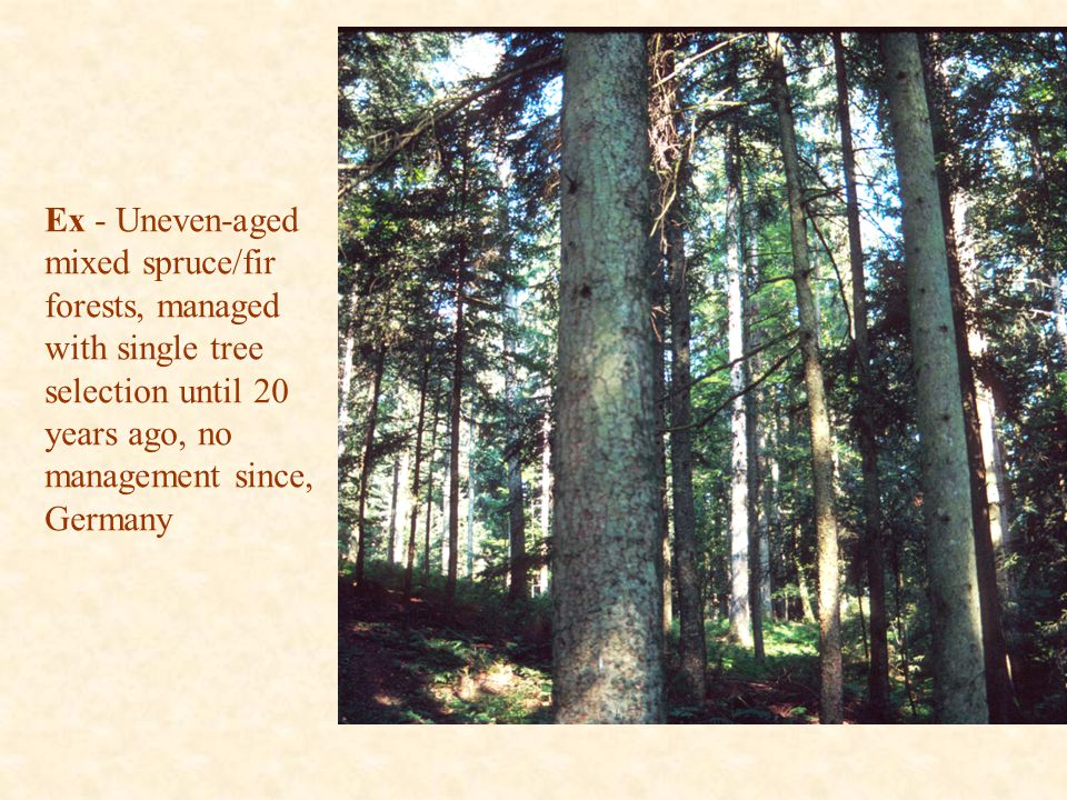 Ex - Uneven-aged mixed spruce/fir forests, managed with single tree selection until 20 years ago, no management since, Germany