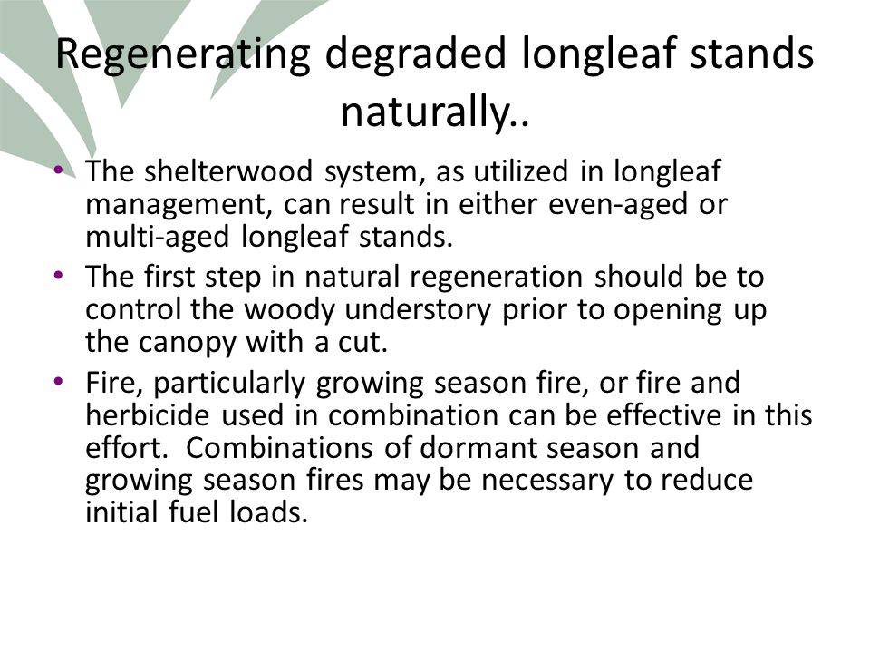 Click to edit Master title style Regenerating degraded longleaf stands naturally..