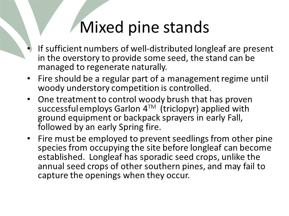 Click to edit Master title style Mixed pine stands If sufficient numbers of well-distributed longleaf are present in the overstory to provide some seed, the stand can be managed to regenerate naturally.