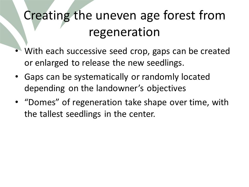 Click to edit Master title style Creating the uneven age forest from regeneration With each successive seed crop, gaps can be created or enlarged to release the new seedlings.