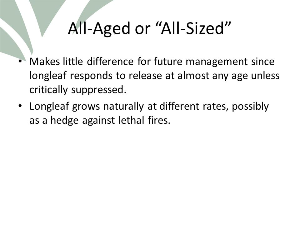 Click to edit Master title style All-Aged or All-Sized Makes little difference for future management since longleaf responds to release at almost any age unless critically suppressed.