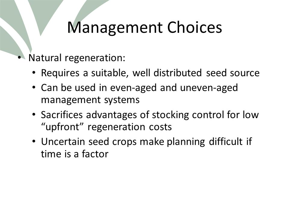 Click to edit Master title style Management Choices Natural regeneration: Requires a suitable, well distributed seed source Can be used in even-aged and uneven-aged management systems Sacrifices advantages of stocking control for low upfront regeneration costs Uncertain seed crops make planning difficult if time is a factor