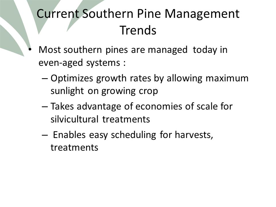 Click to edit Master title style Mixed pine stands… Successive cuts to increase the number and/or size of the previous gaps will create a mixed stand of several age classes, that will, over time, become an all-aged longleaf stand.