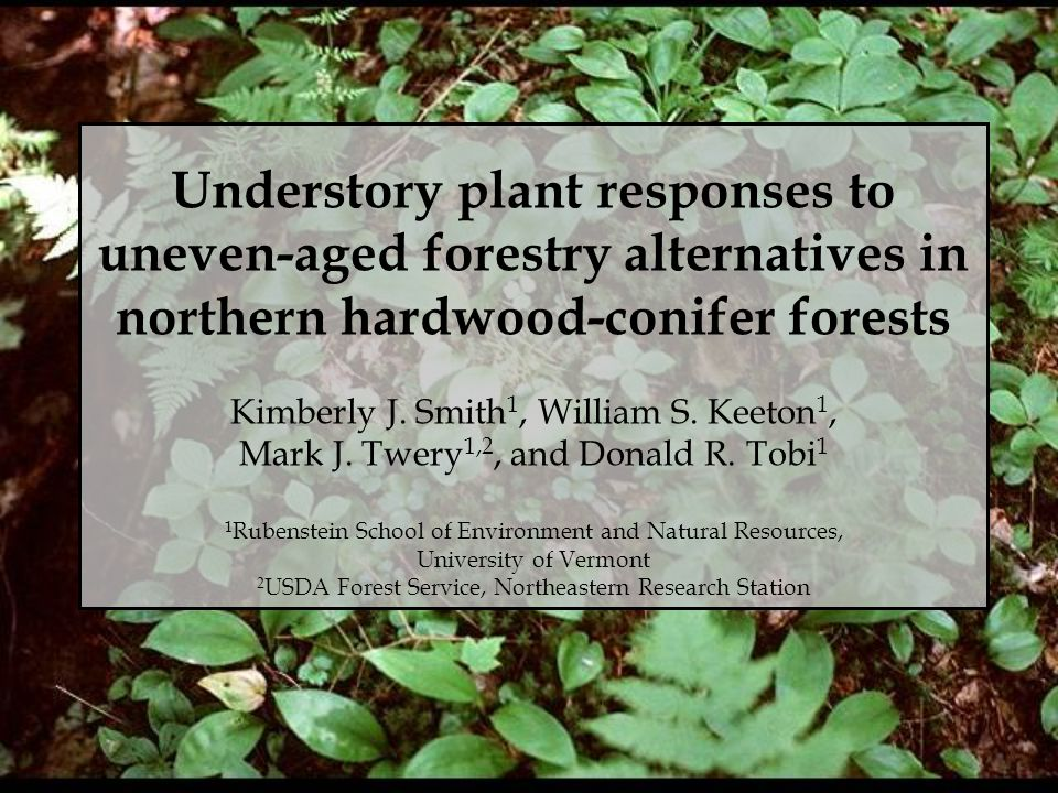 Understory plant responses to uneven-aged forestry alternatives in northern hardwood-conifer forests Kimberly J.