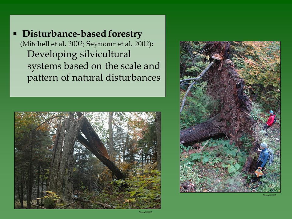  Disturbance-based forestry (Mitchell et al. 2002; Seymour et al.