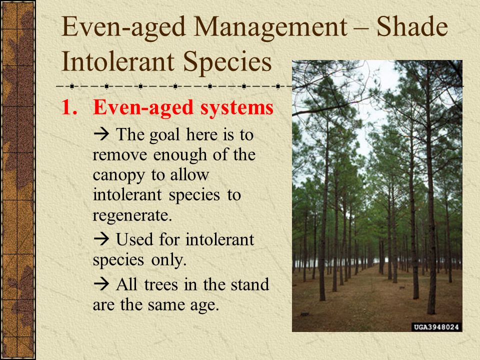 Even-aged Management – Shade Intolerant Species 1.Even-aged systems  The goal here is to remove enough of the canopy to allow intolerant species to r