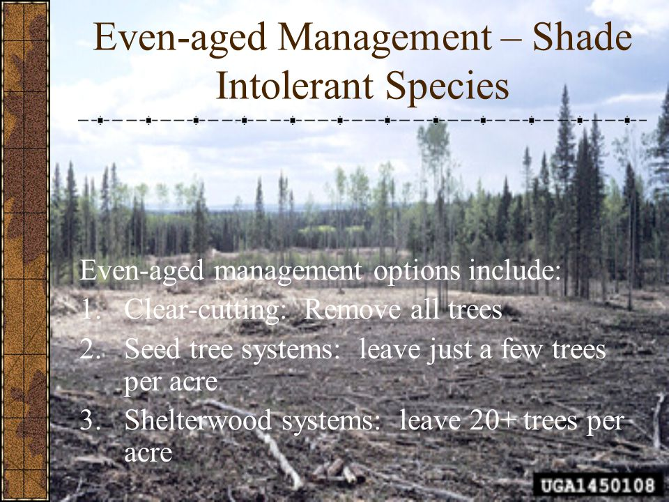 Even-aged Management – Shade Intolerant Species Even-aged management options include: 1.Clear-cutting: Remove all trees 2.Seed tree systems: leave jus