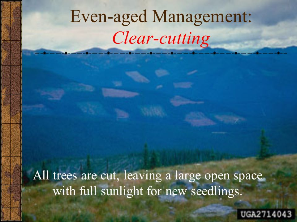 Even-aged Management: Clear-cutting All trees are cut, leaving a large open space with full sunlight for new seedlings.