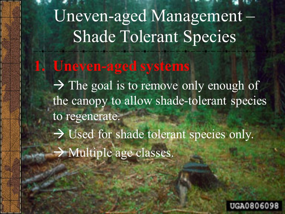 Uneven-aged Management – Shade Tolerant Species 1.Uneven-aged systems  The goal is to remove only enough of the canopy to allow shade-tolerant specie