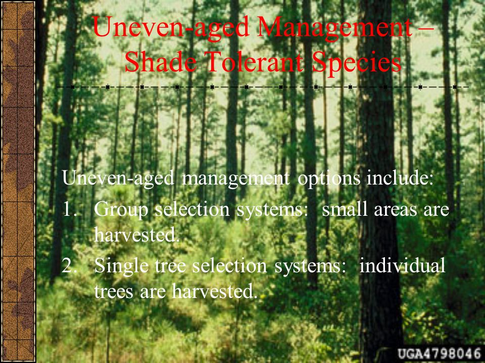 Uneven-aged Management – Shade Tolerant Species Uneven-aged management options include: 1.Group selection systems: small areas are harvested. 2.Single