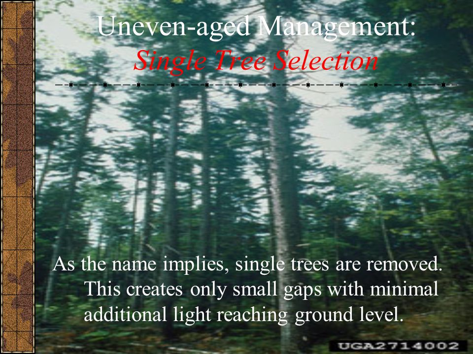 Uneven-aged Management: Single Tree Selection As the name implies, single trees are removed. This creates only small gaps with minimal additional ligh