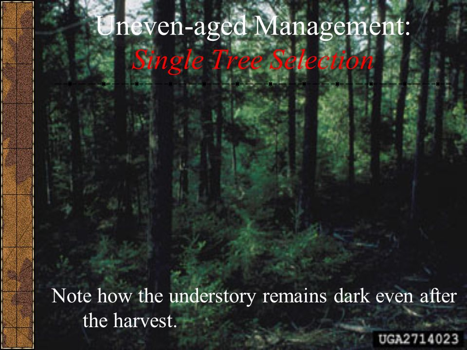 Uneven-aged Management: Single Tree Selection Note how the understory remains dark even after the harvest.