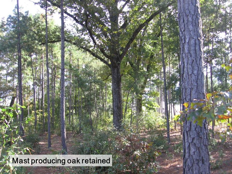 Mast producing oak retained