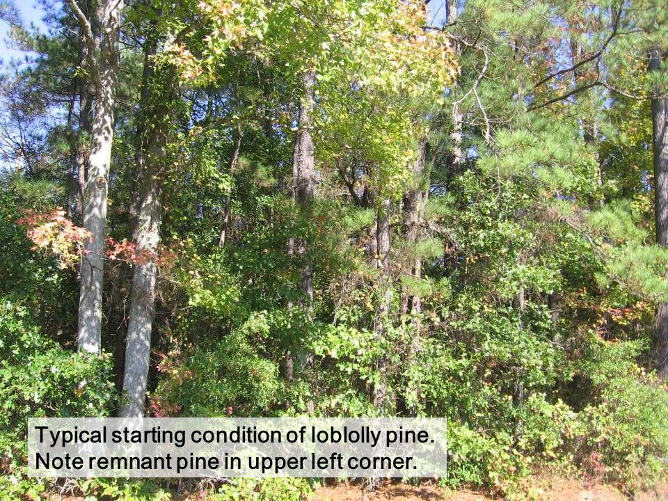 Mast producing oak retained