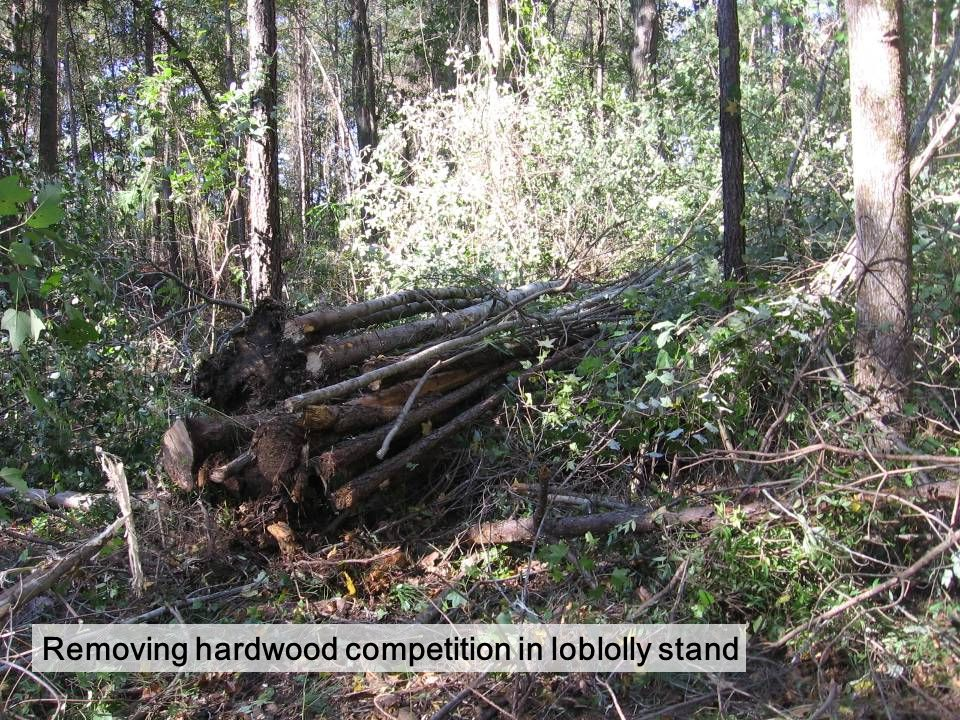 Hardwood competition removal yields fuel chips at 50 cents/ton.