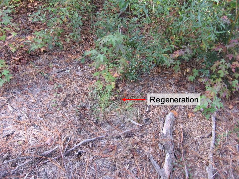 Economic benefits of uneven aged management of loblolly pine over an even aged approach.