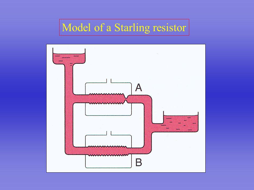 Model of a Starling resistor