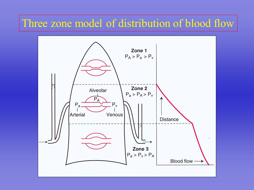 Three zone model of distribution of blood flow