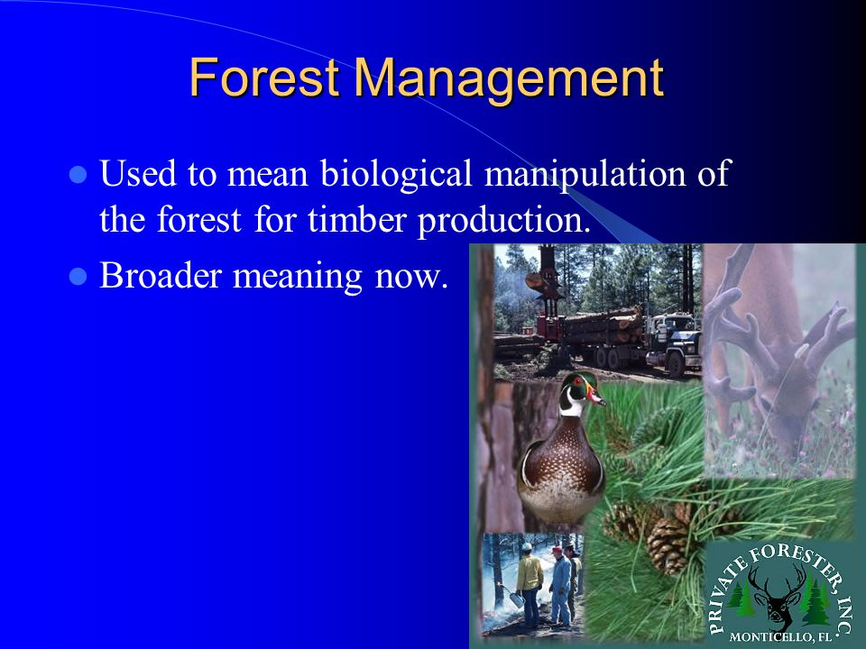 Forest Management Internal variables to forest management – Temperature – Rainfall – Soil type – Tree species These variables control production possibilities