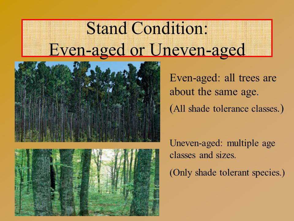 Stand Condition: Even-aged or Uneven-aged Even-aged: all trees are about the same age.