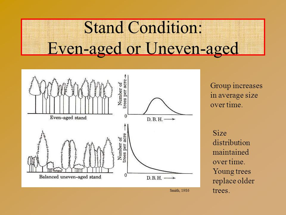 Stand Condition: Even-aged or Uneven-aged Smith, 1986 Group increases in average size over time.