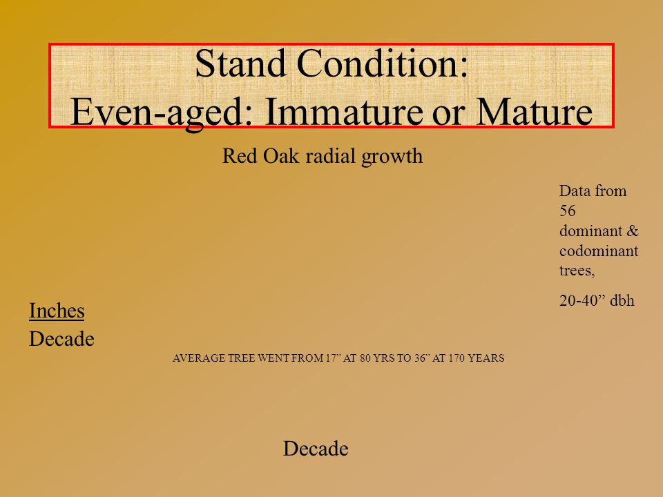 Stand Condition: Even-aged: Immature or Mature Red Oak radial growth Decade Inches Decade Data from 56 dominant & codominant trees, 20-40 dbh AVERAGE TREE WENT FROM 17 AT 80 YRS TO 36 AT 170 YEARS