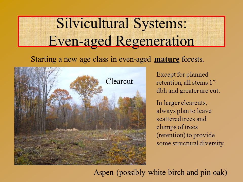 Silvicultural Systems: Even-aged Regeneration Starting a new age class in even-aged mature forests.