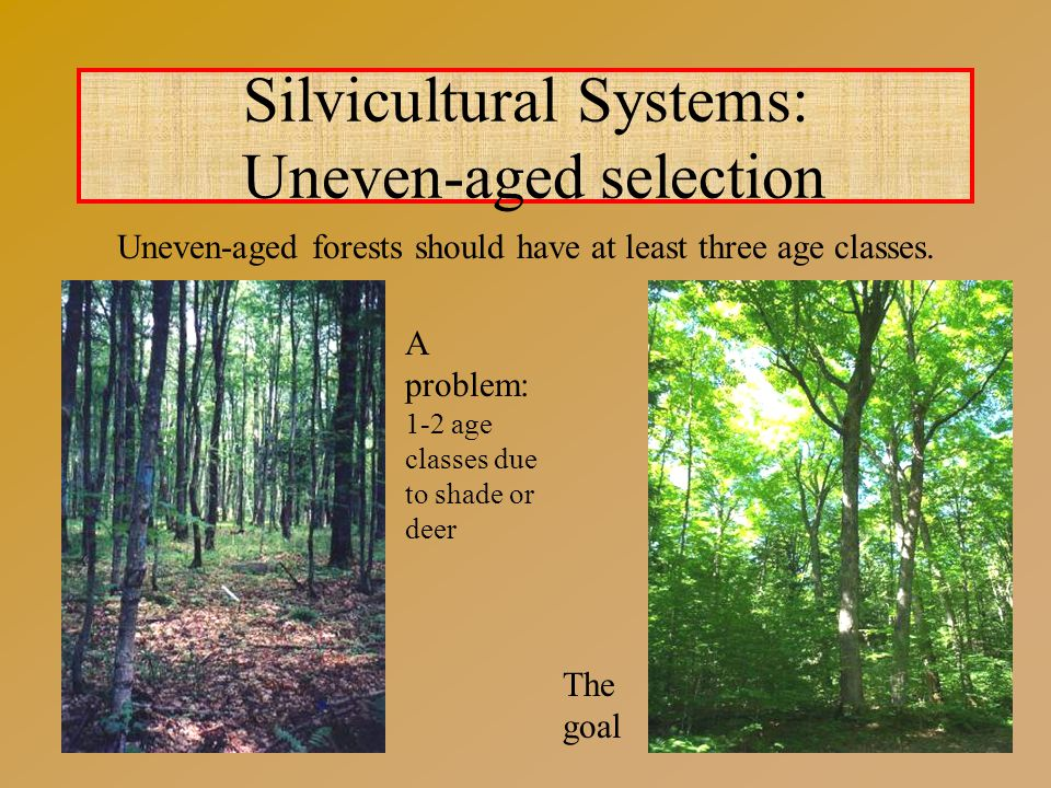Silvicultural Systems: Uneven-aged selection Uneven-aged forests should have at least three age classes.