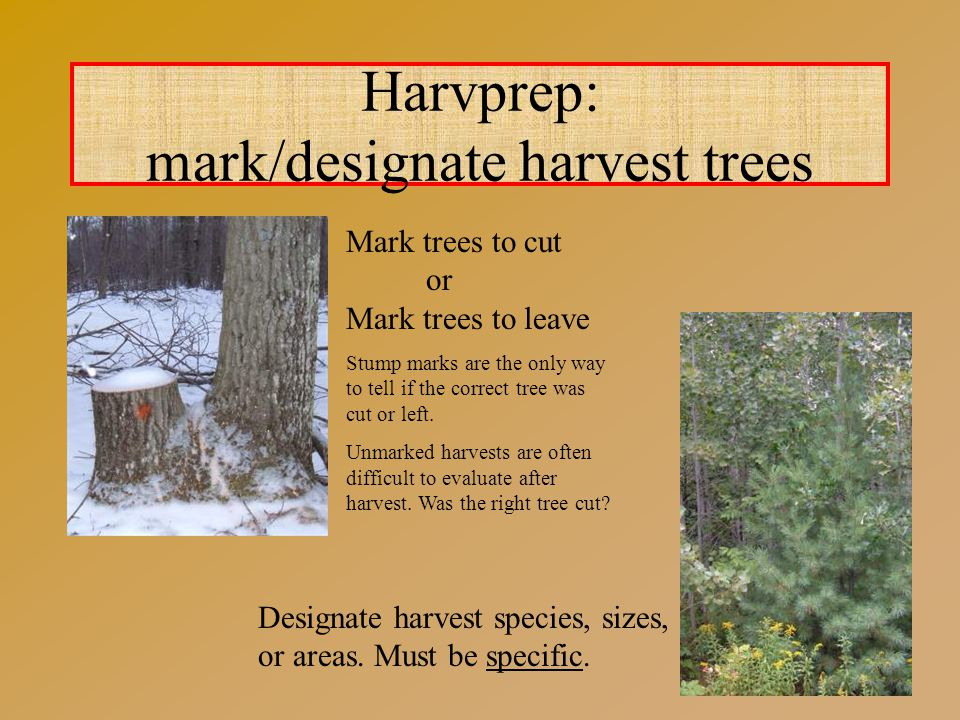 Harvprep: mark/designate harvest trees Mark trees to cut or Mark trees to leave Stump marks are the only way to tell if the correct tree was cut or left.