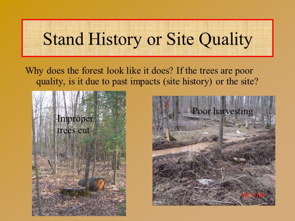 Stand History or Site Quality Why does the forest look like it does.