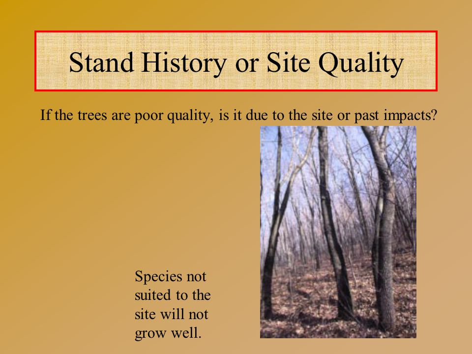 Stand History or Site Quality If the trees are poor quality, is it due to the site or past impacts.
