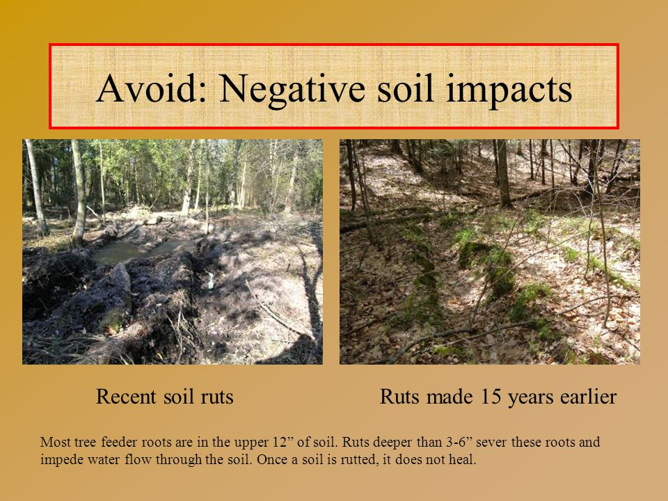Avoid: Negative soil impacts Recent soil rutsRuts made 15 years earlier Most tree feeder roots are in the upper 12 of soil.