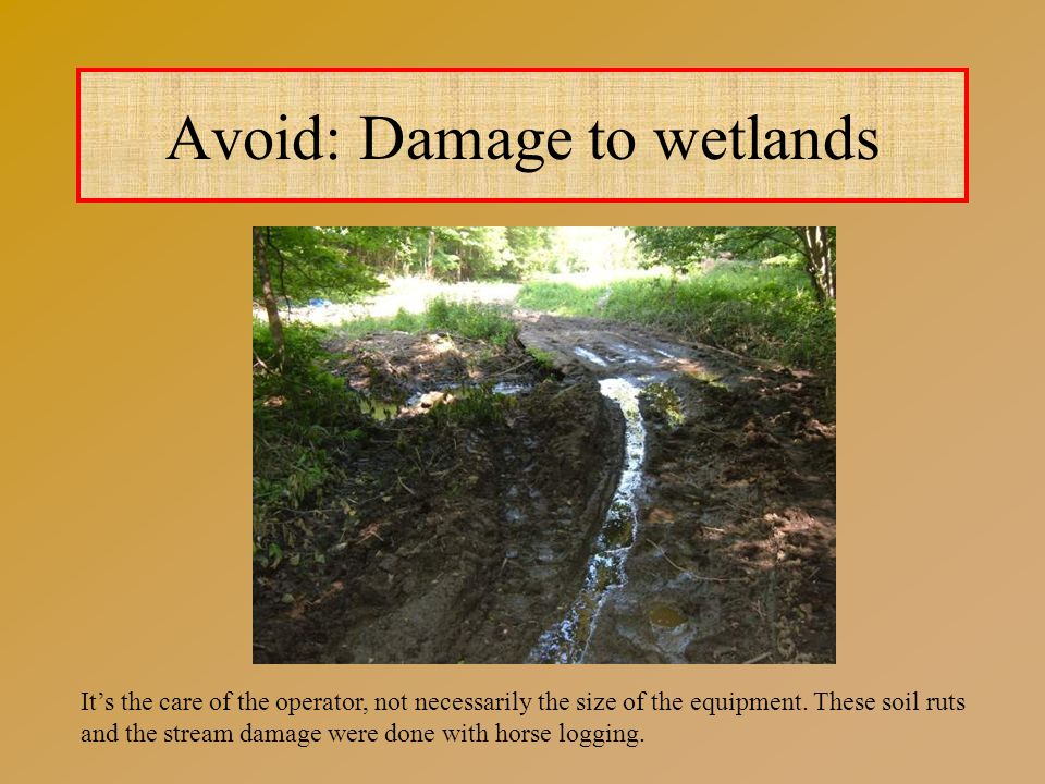 Avoid: Damage to wetlands It's the care of the operator, not necessarily the size of the equipment.