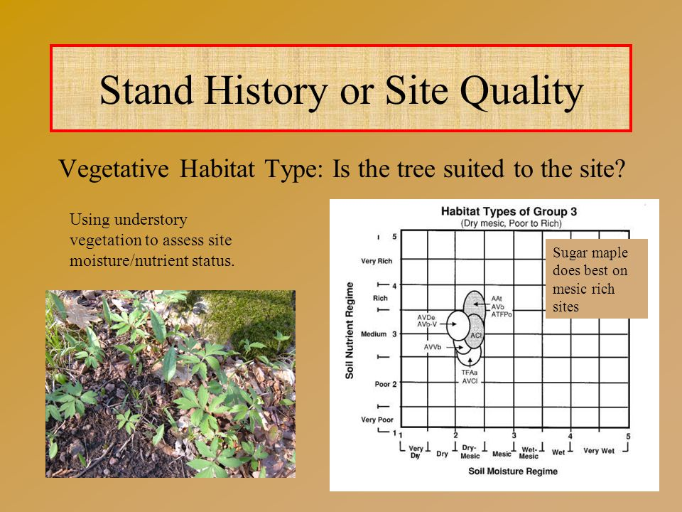 Vegetative Habitat Type: Is the tree suited to the site.