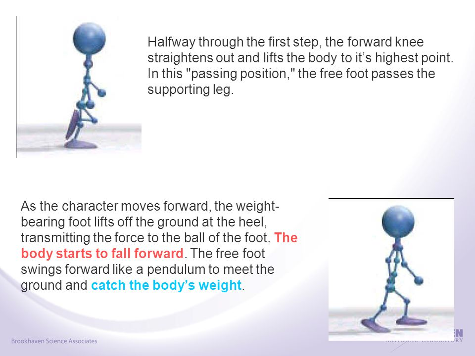 Halfway through the first step, the forward knee straightens out and lifts the body to it's highest point.