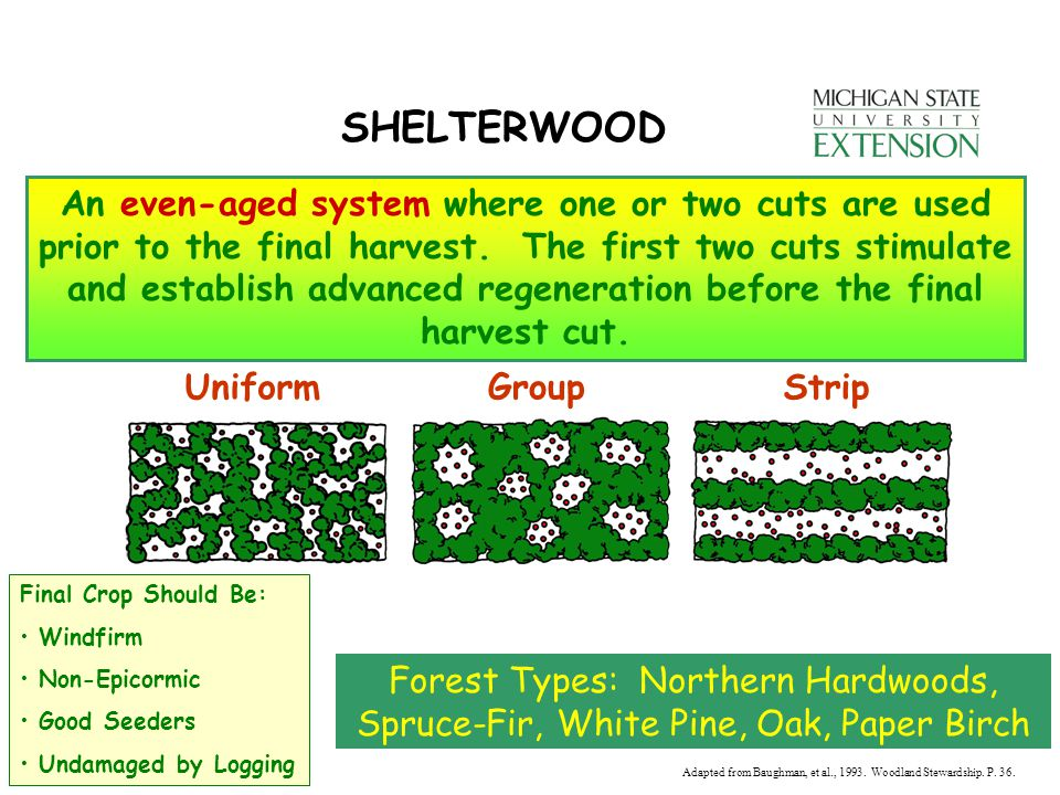 SHELTERWOOD An even-aged system where one or two cuts are used prior to the final harvest.