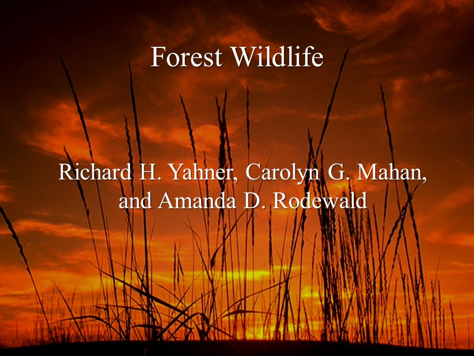 Forest Wildlife Richard H. Yahner, Carolyn G. Mahan, and Amanda D. Rodewald